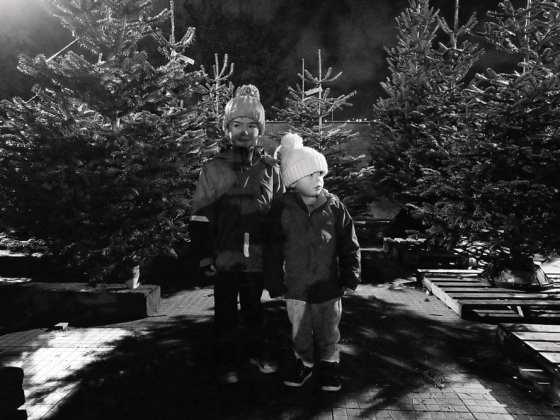 pines and needles christmas tree