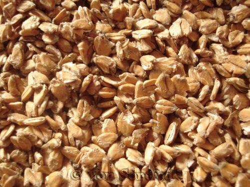 Sortfods Gnavercorner - artikel om fodring af marsvin - Valset korn