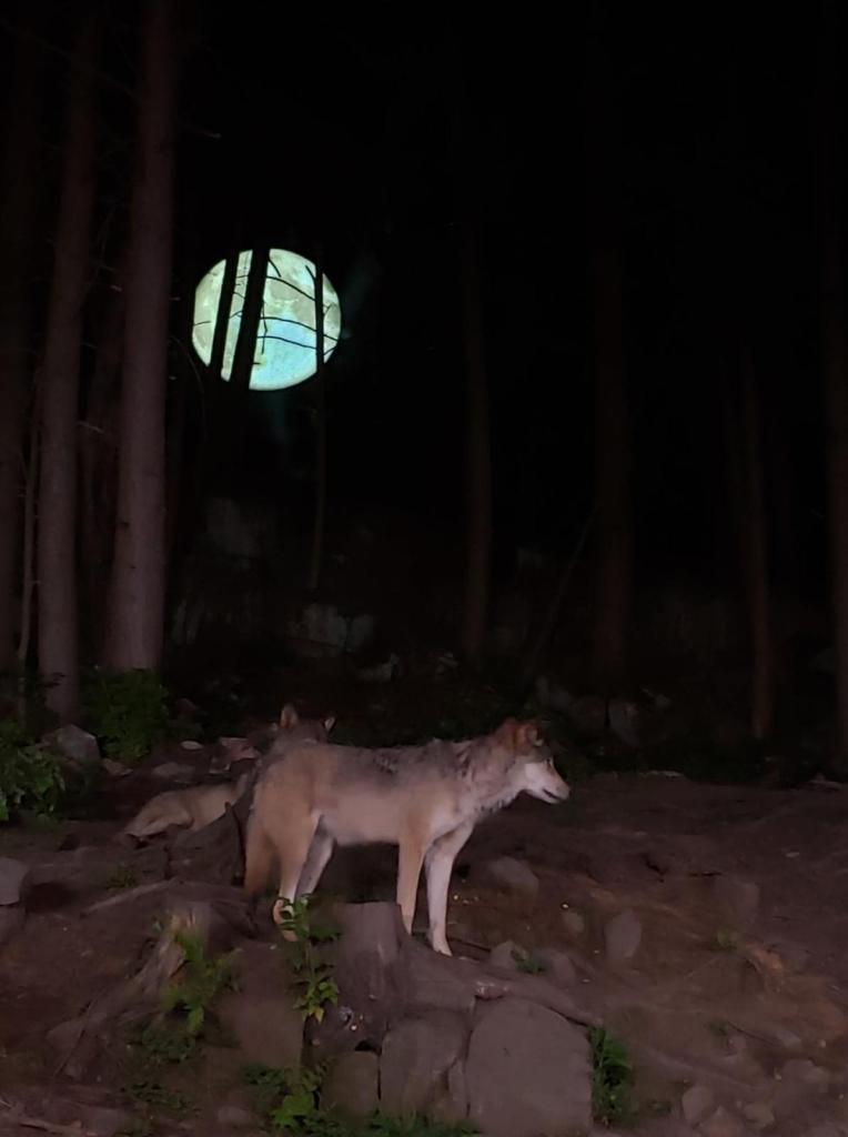 Parc Oméga La Nuit