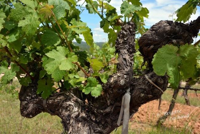 Art et vin St Hilaire 270514 130