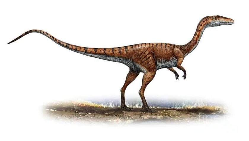 Dinosaur names - Coelophysis