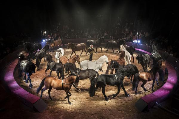 sortir bordeaux spectacle equestre alexis gruss jumping international de bordeaux. Black Bedroom Furniture Sets. Home Design Ideas