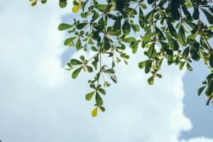 multiplicité arbre