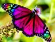 rainbow-butterfly[1]