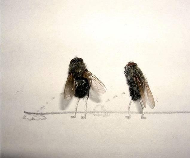 død flue