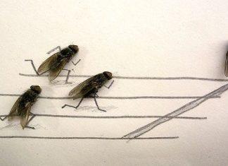døde fluer