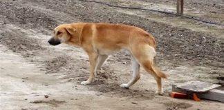 forlatt hund