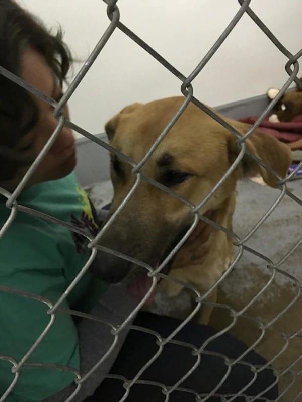 Foto og kilde : Facebook / Kings SPCA-Rescue