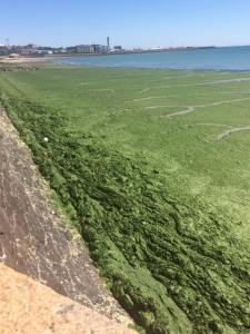 The REAL Sea Lettuce Conferences – Report & Dates