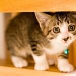 写真素材:猫3