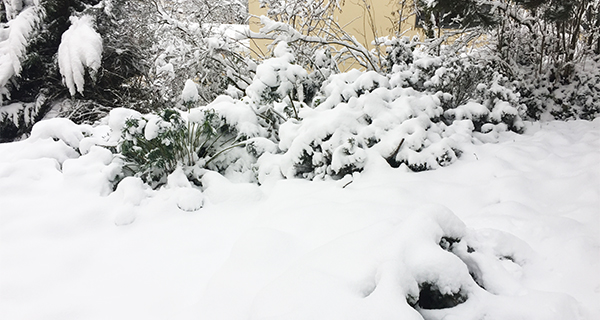 Bushes laden with snow Burdened.
