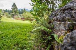 giardinobotanico2