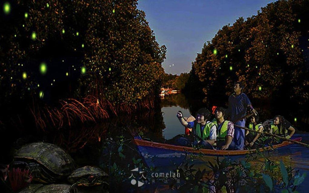 Mangrove_Fireflies_4_530x @ 2x