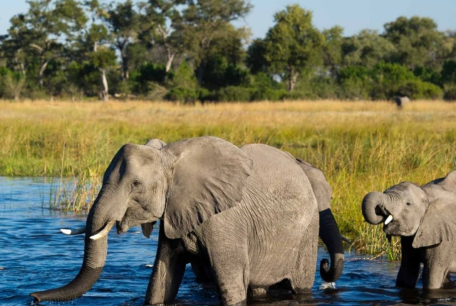Linyanti-Wildlife-Reserve