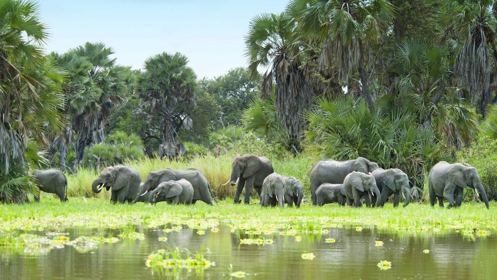 قطيع من الفيلة وماء سيلوس 1920x1080-1