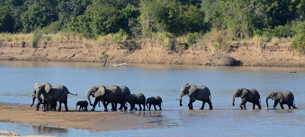 luangwa_river_crossing