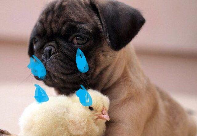 """""""別當哈巴狗,他根本不愛你"""""""
