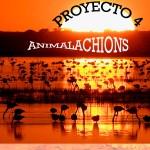 Proyecto 4 de Matemáticas de 3º EP del CEIP Blas Infante (Sanlúcar de Barrameda)