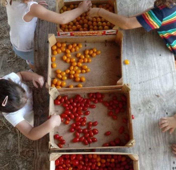Sosteniamo questo progetto di educazione ambientale in campo aperto: Siamo alberi nella città dei bambini spensierati