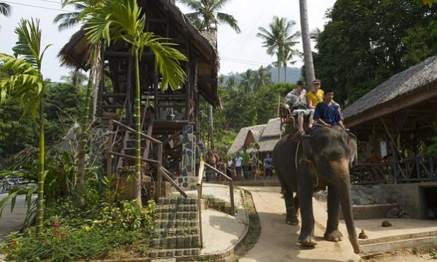 Elephant trekking on Koh Samui. Photograph: Rex/Shutterstock