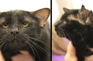 Four-Eared Cat Called Batman Adopted From Pittsburgh Shelter