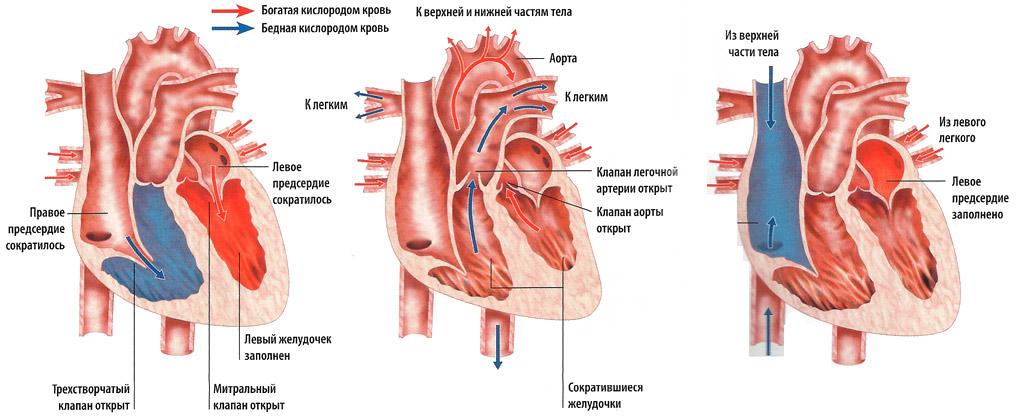 dibazolio vartojimas hipertenzijai gydyti
