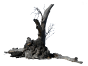 lightning_tree_precut_by_stockopedia-d4rvisp