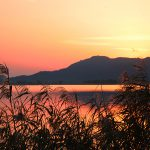 """Silver evening that does not lose to Japanese pampas grass – Lake Biwa largest inner lake """"Nishinoko"""" of reed flowers in full bloom"""