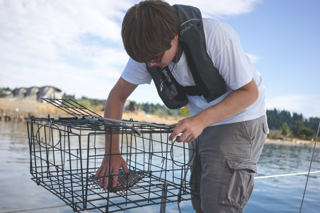 Baiting the crab trap