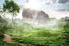Des hauteurs verdoyantes