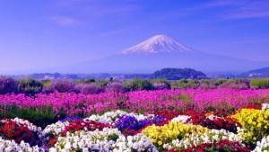 La-cape-fleurie-du-Printemps-réveille-la-Nature