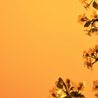 "<span itemprop=""name"">Orange background bloom tree</span>"