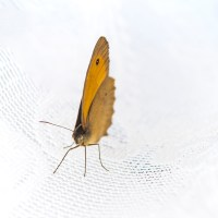 "<span itemprop=""name"">Butterfly go for a walk</span>"