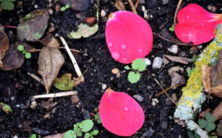 Weiblichkeit leben: Vom Herbst lerne ich die Gemütlichkeit, die vertraute Zurückgezogenheit