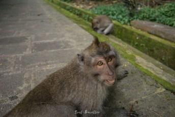 Monkey Forest bei Ubud