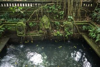 Teich im Monkey Forest bei Ubud