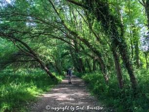 soul-traveller-camino-portugese-central_215