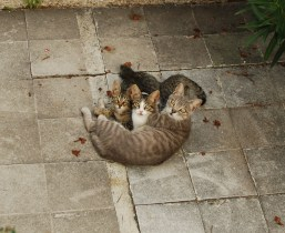 Kittens at the Teahouse