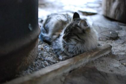 Cat at Refugio