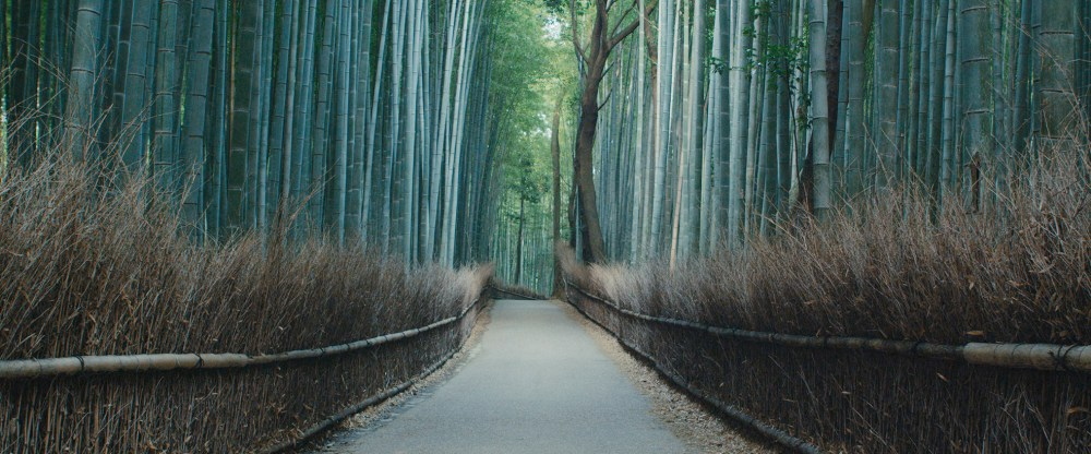 Bamboo forest, Kyoto (c) planetary collective