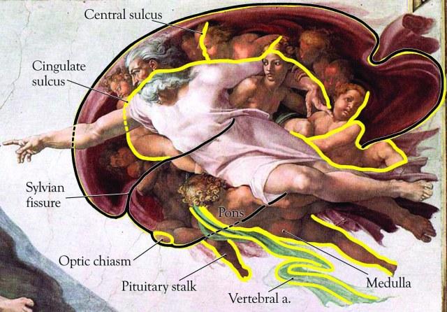 Michelangelo-Sistine-Chapel-Adam-Brain-