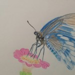 Butterfly on flower pencil crayon drawing