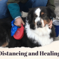 Picture of a dog with the words Social distancing and healing touch