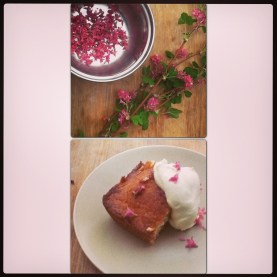 Wild Blackcurrant Blossom Drizzle Cake.