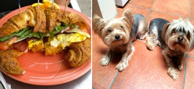 Not kidding, this is almost to scale. Left: breakfast croissant. Right: 2 end-to-end Yorkies