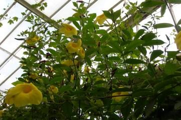 A splash of yellow at Kew Gardens, UK taken by Sue Ellam, London, UK