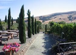 A Californian vineyard taken by Sue Ellam, London, UK