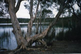 Brown Lake, Stradbroke Island, Queensland taken by Sue Ellam, London, UK
