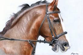 horses head 1
