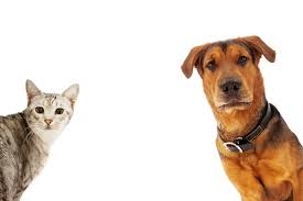 Holistic Care for Dogs & Cats @ Equenergy: Wellbeing Naturally | Stoke Gifford | England | United Kingdom